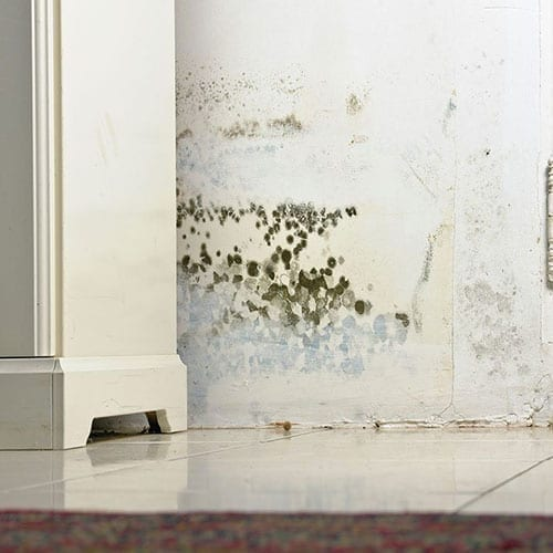 Mold removal and remediation in Fuquay-Varina NC